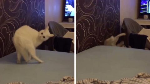 CAT SPINS ON HERSELF AND FALLS OFF BED IN HILARIOUS VIRAL VIDEO Image