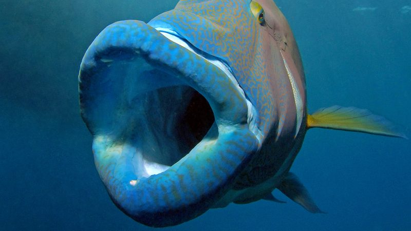 OH WHAT A FISHY FISH! FISH WITH MASSIVE LIPS CHOMPS THROUGH OCEAN FLOOR Image