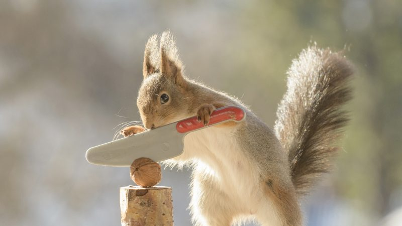ARE YOU NUTS? PHOTOGRAPHER WONDERS WHAT WOULD HAPPEN IF SQUIRRELS COULDN'T CRACK THEIR NUTS Image