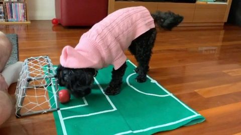 CLEVER DOG SCORES A GOAL IN SELF-ISOLATION FOOTBALL GAME Image