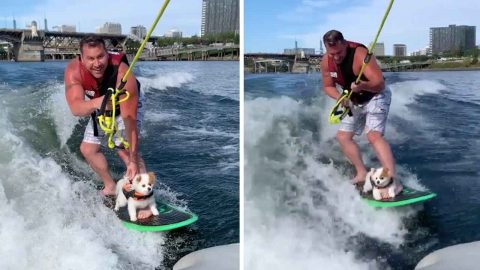 TALENTED SURFING DOG NARROWLY AVOIDS A WIPEOUT WHILE CATCHING WAVES Image