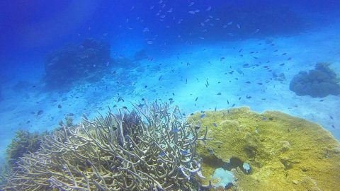 WATCH: DIVER EXPLORES BEAUTY OF THE GREAT BARRIER REEF Image
