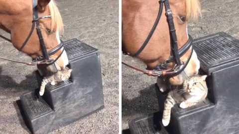 FRIENDLY HORSE NUZZLES CALM CAT IN ADORABLE VIDEO Image