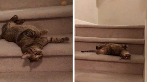 ADORABLE CAT DOESN'T JUST WALK DOWN THE STAIRS LIKE ANY MEAGRE FELINE, CHOOSING INSTEAD TO ROLL DOWN EACH STEP Image