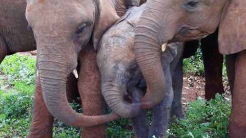 BABY ELEPHANT HAS LUCKY ESCAPE AFTER BEING LEFT ORPHANED IN WILD Image