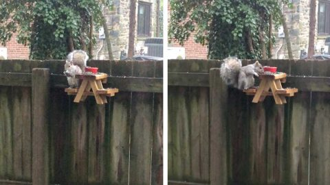 WATCH THIS ADORABLE VIDEO OF SQUIRRELS ENJOYING A PICNIC TOGETHER Image