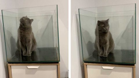 CURIOUS CAT FOUND STUCK IN EMPTY FISH TANK Image