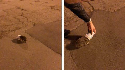 UNLUCKY HEDGEHOG SPOTTED STUCK IN ICE CREAM POT IN MIDDLE OF THE ROAD Image