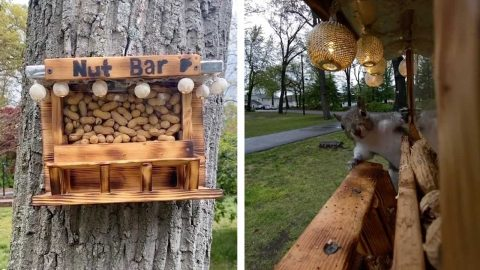 CRAFTY MAN CREATES 'NUT BAR' FOR SQUIRRELS WITH LIGHTS AND STOOL Image