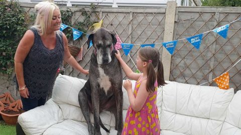 WORLD'S TALLEST DOG CELEBRATES EIGHTH BIRTHDAY Image