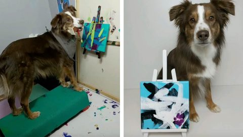 ITS PAW-CASSO! TALENTED DOG PAINTS BRIGHT PORTRAITS AND DONATES THE PROFITS TO LOCAL ANIMAL RESCUES Image