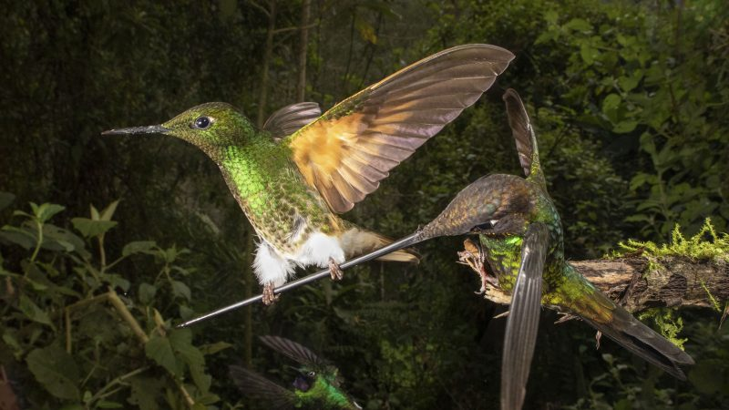 ONCE-IN-A-LIFETIME MOMENT RARE HUMMINGBIRD'S BEAK COSTS HIM DINNER Image