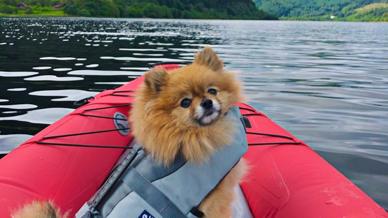 ADVENTUROUS POMERANIAN CLIMBS MOUNTAINS, HIKES THROUGH THE SNOW, AND EVEN KAYAKS WITH HIS OWNER Image