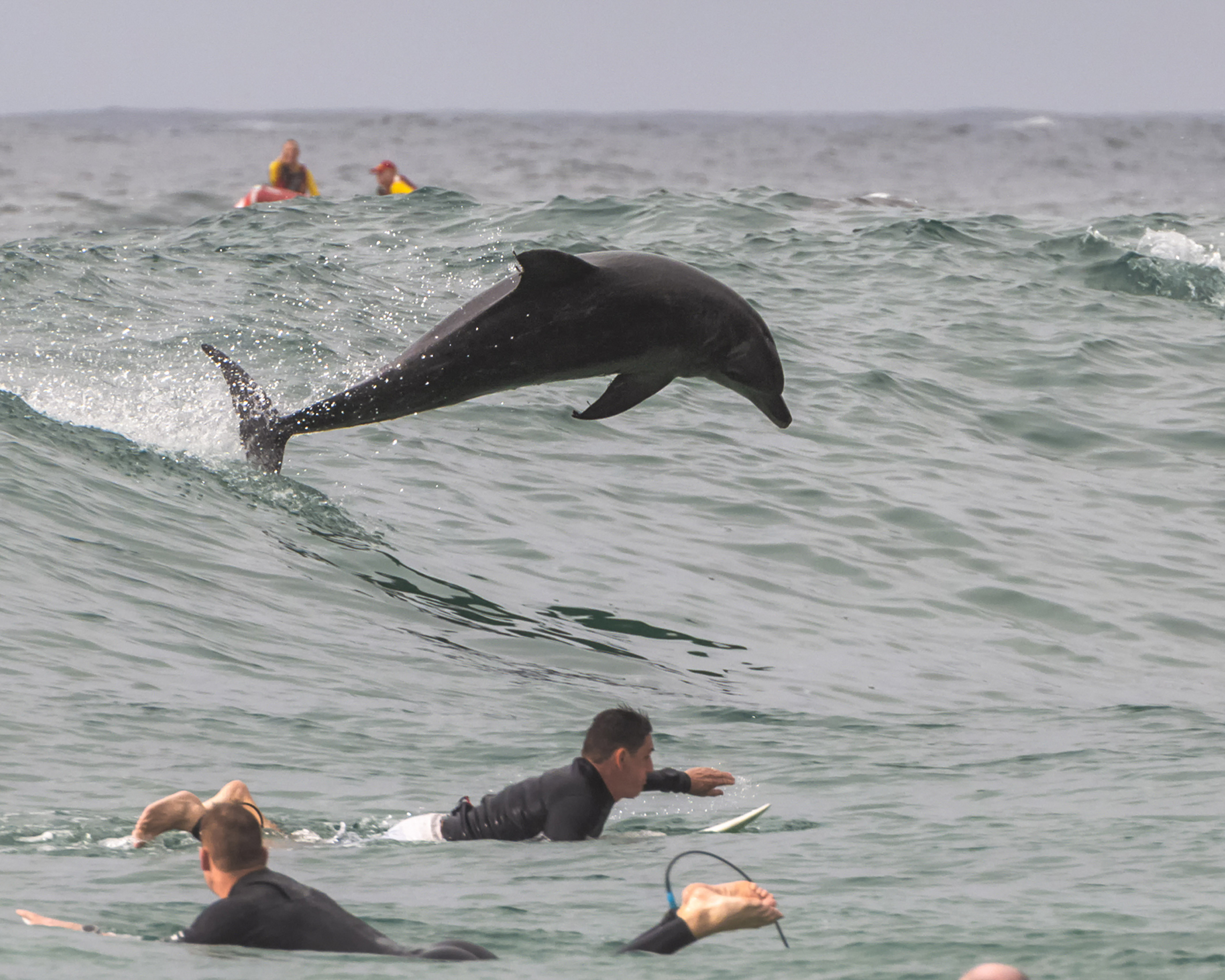 DOL-FUN AND GAMES! PLAYFUL DOLPHIN SHOWS OFF FIN-TASTIC SURFING SKILLS ALONGSIDE LOCALS Image