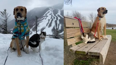 INSEPARABLE DOG AND CAT GO ON HIKES TOGETHER Image