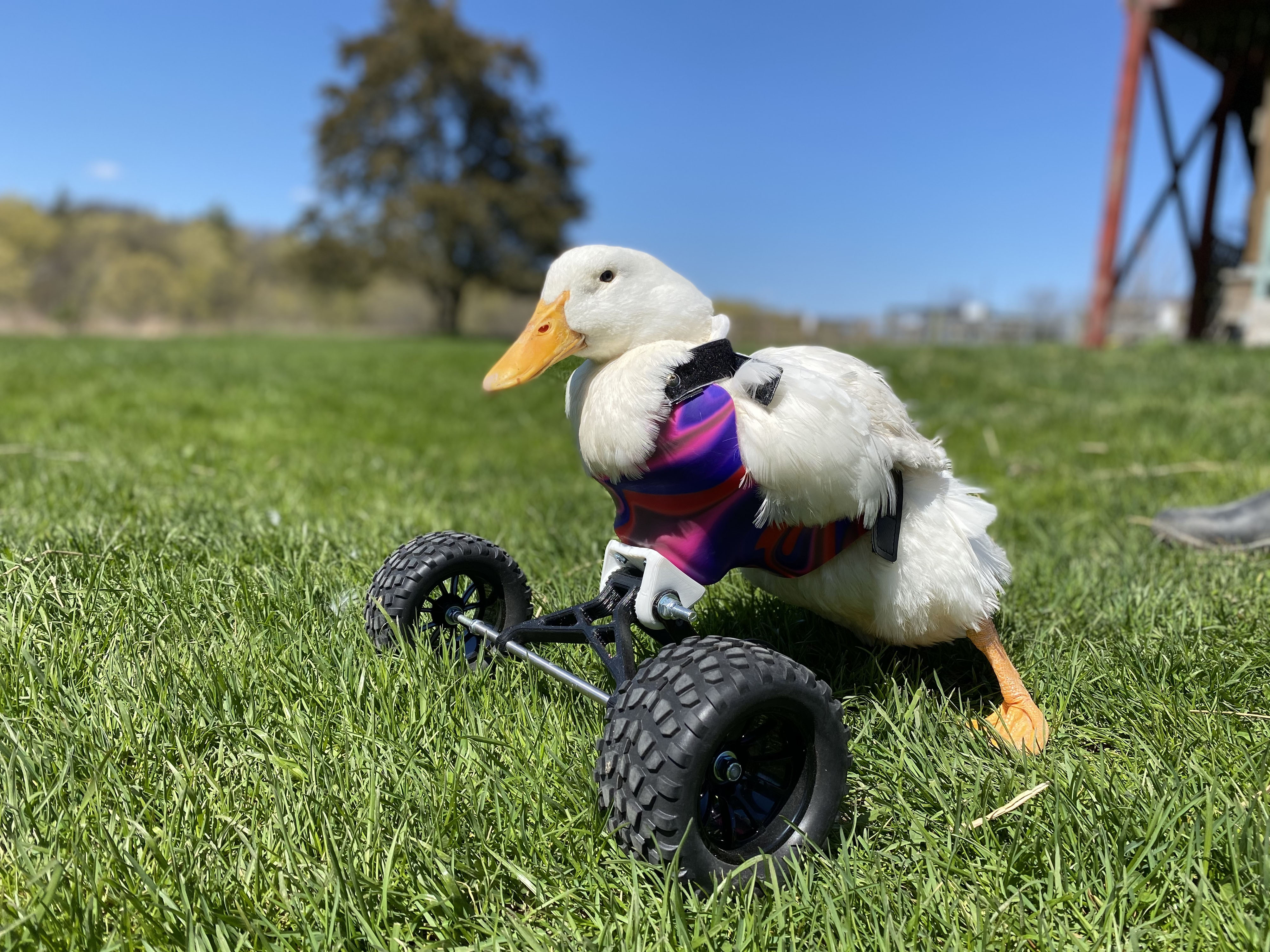 MONSTER TR-DUCK! DISABLED DUCK LEFT PARALYSED AFTER ATTACK GETS DECKED OUT WITH MONSTER QUAD WHEELS Image