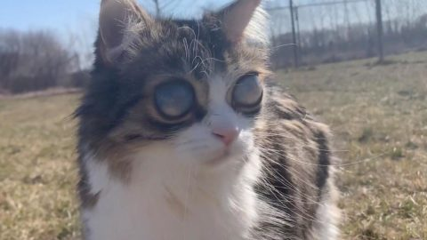 ADORABLE BLIND CAT SHOWS OFF ABNORMALLY HUGE EYES Image
