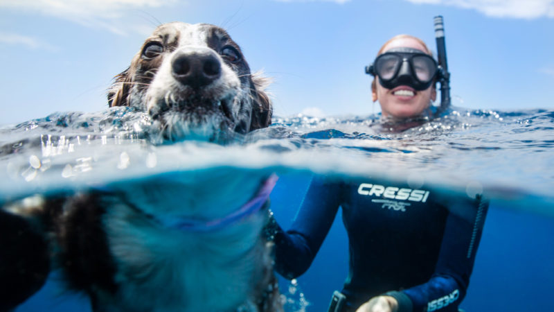 ADORABLE PUP WHO LOVES THE WATER TRIES TO COMMUNICATE AND HERD DOLPHINS Image