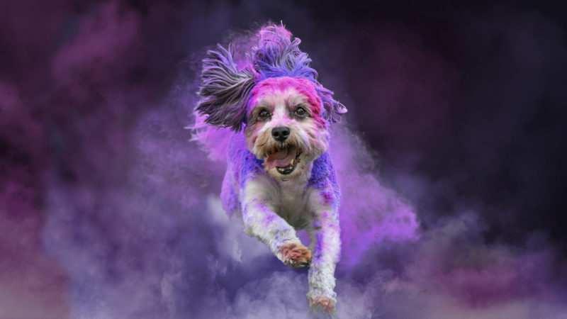PAINT COVERED PUPS CREATE EXPLOSIONS OF COLOUR Image