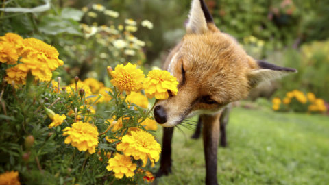 ANIMALS SHOW NATURE AT ITS FINEST AS THEY ARE PHOTOGRAPHED AMONGST FLOWERS Image
