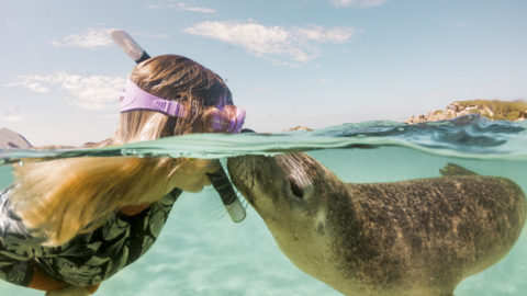 PHOTOGRAPHER GETS THE SEAL OF APPROVAL FROM AQUATIC MAMMALS Image