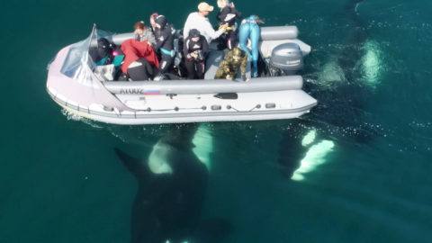IMPRESSIVE PHOTOGRAPHS OF LUCKY WHALE WATCHERS GETTING CLOSE TO THE HUGE ANIMALS Image