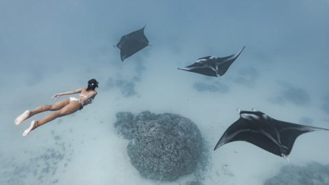 AMAZING PICTURES SHOW A FREEDIVER SWIMMING WITH MANTA RAYS Image