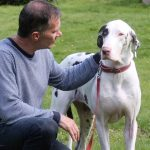 IN THE (VERY LARGE) DOGHOUSE! CHEMIST SPENDS THOUSANDS RESCUING HUGE GREAT DANE FROM SRI LANKA – ONLY FOR IT TO DESTROY HIS FURNITURE AND CLOTHES