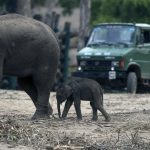 Wildlife Photographer Vows Never To Return To India After Witnessing Shocking Abuse Of Elephants During Wildlife Reserve Trip