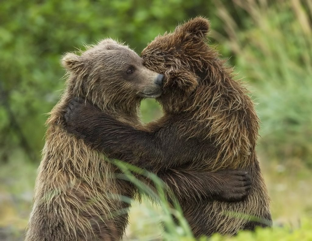 Image result for bears hugging