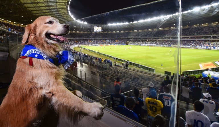 dog friendly stadium