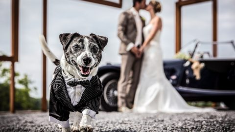 Animals upstage brides on their big day in hilarious photobomb wedding snaps  Image