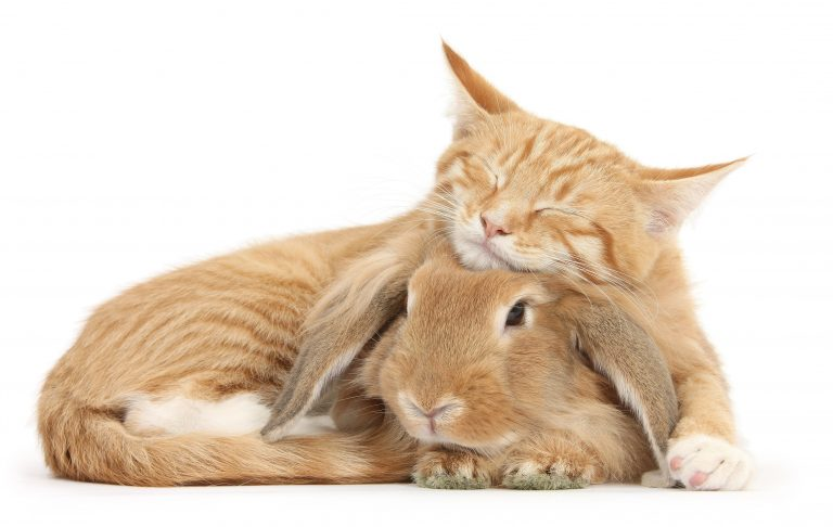 Cats And Bunnies Best Friends