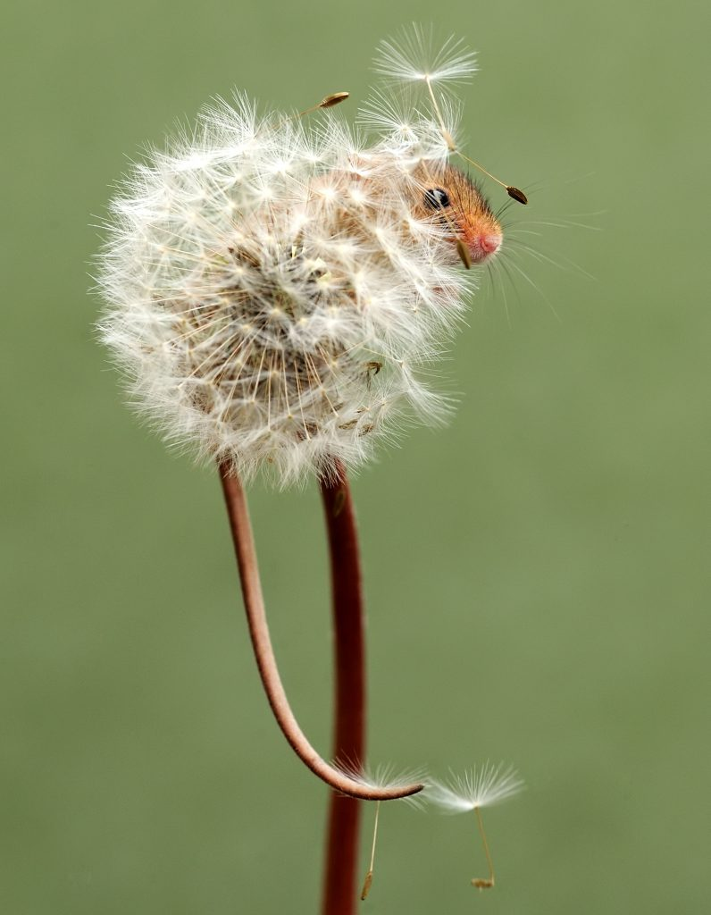 Image result for mice looking into the lens of the camera
