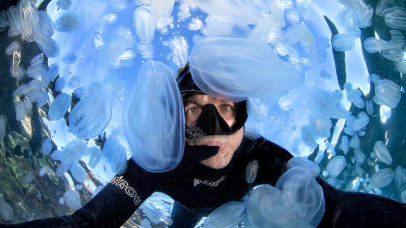 Jello there! Photographer captures selfie surrounded by hundreds of 'jellyfish' Image