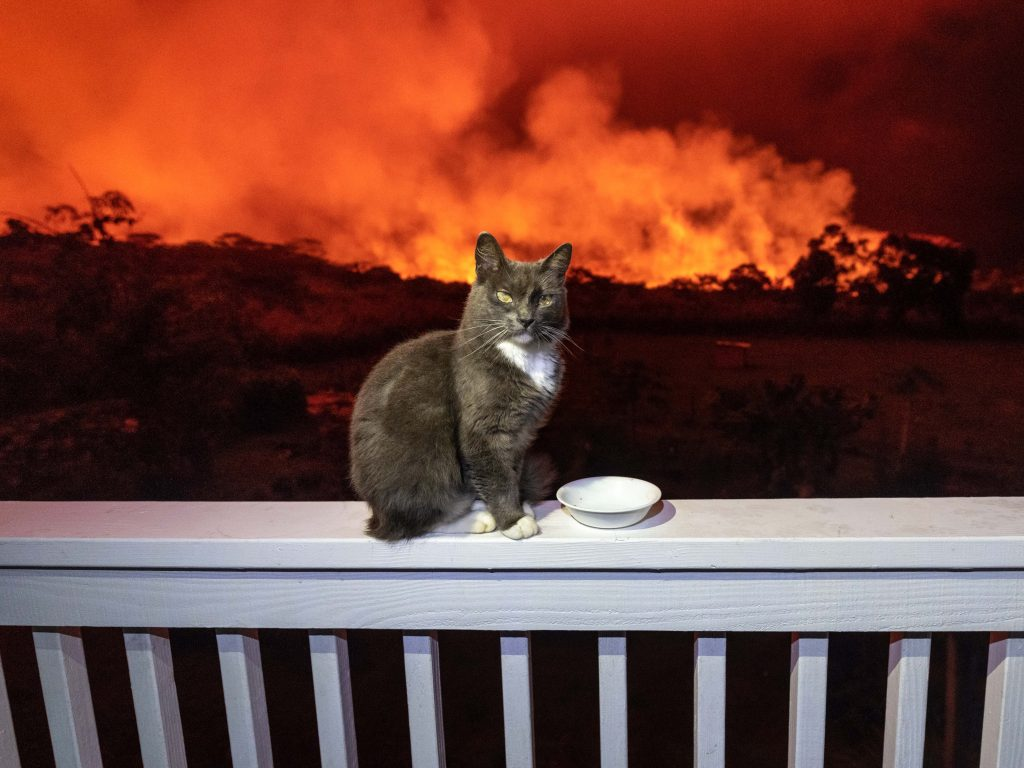 6_CATERS_HAWAII_RESIDENTS_EVACUATED_132_