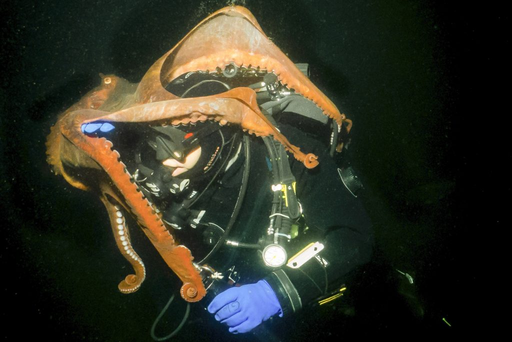 Tentacles away from disaster - pictures show near miss for ...