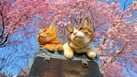 Meow's about another holiday? Adorable globe-trotting kitties snapped travelling the world Image