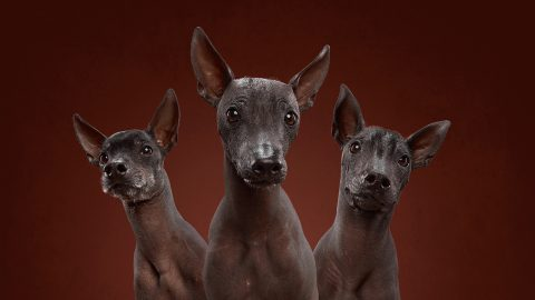 Pawtraits! Husband and wife duo capture diverse personalities of wide variety of dog breeds Image