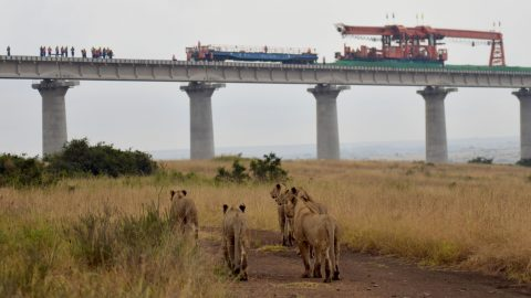 Lions and construction sites: shocking images show wildlife under threat as major railway ploughs through Kenyan national park Image