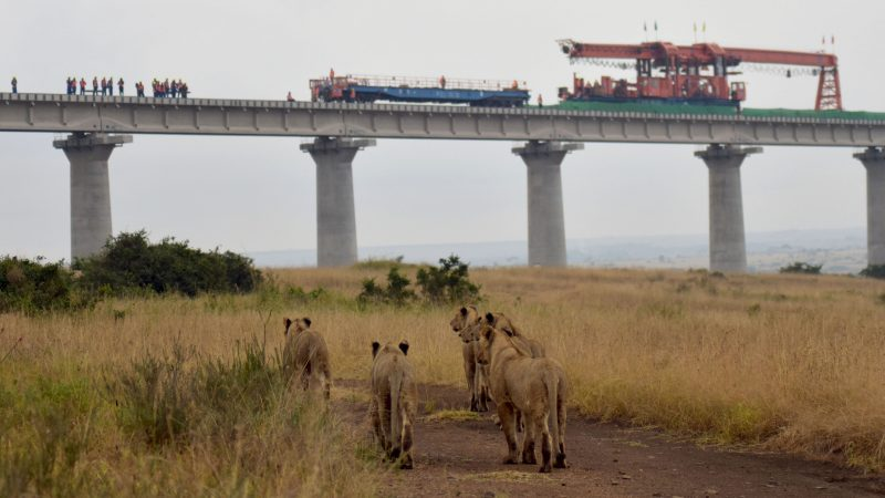 Lions and construction sites: shocking images show wildlife 'under threat' as major railway ploughs through Kenyan national park Image