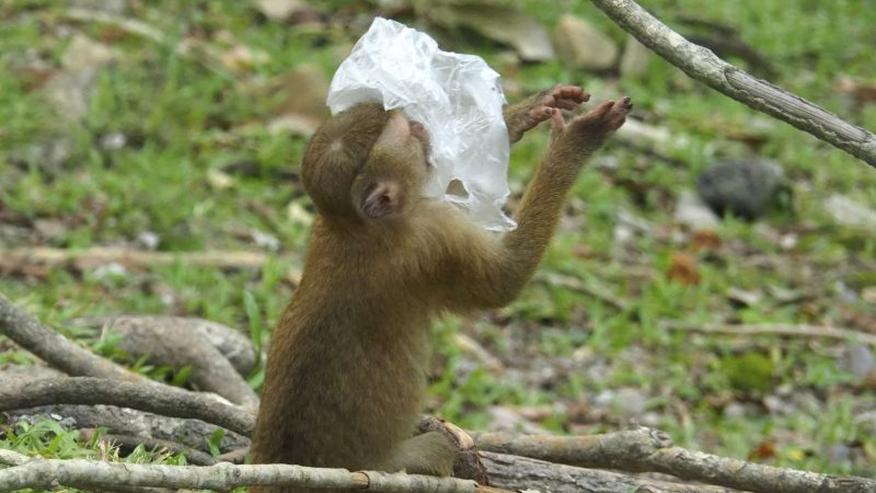 Monkey suffocates on plastic bag left by tourists in Thailand Image