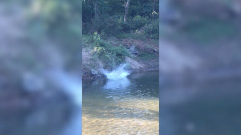 Rope-a-dope: Woman on rope swing falls down bank before going head first into river Image