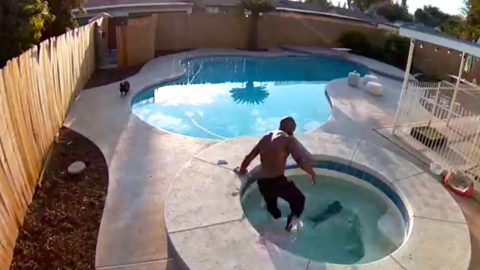 Heart stopping moment dog owner realises his pet has fallen into pool before jumping in to save her Image
