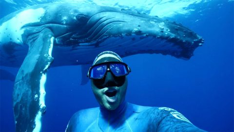 Diver captures selfie with giant whale while swimming in ocean Image