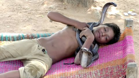 Seven year old boy feeds, bathes and sleeps with his three deadly snake best mates - despite bond leaving parents terrified Image
