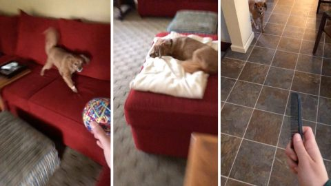 Hilarious video shows nervous dog who is terrified by everything Image