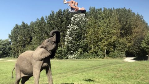 'El of a lot of fun! Circus trainer shows off elephant's incredible tricks – and insists animal is happy and they have 'perfect trust' for each other  Image