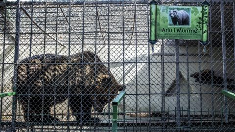 """Saddest Bears In Europe"" Shocking Images Show Bears Kept In Small Cages Outside Restaurant As Tourist Attraction Image"