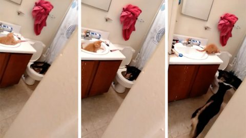 Hilarious Video Shows Cat And Dog Best Friends Playing In Bathroom Image